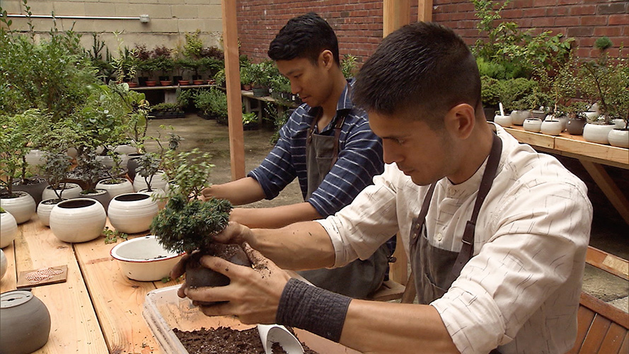 Image: NYの若者に大人気!Bonsaiのトレンドとは?